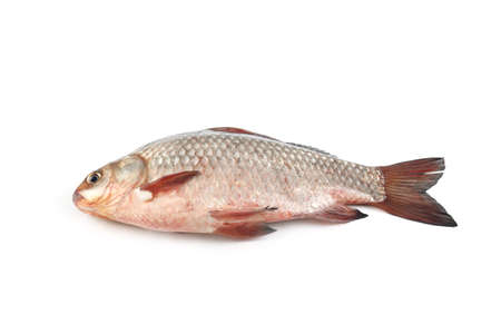Isolated crucian carp. kind of fish from the side. Live fish with flowing fins. River fish