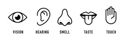 Icon set of five human senses: vision, smell, hearing, touch, taste. vector illustration. Иллюстрация