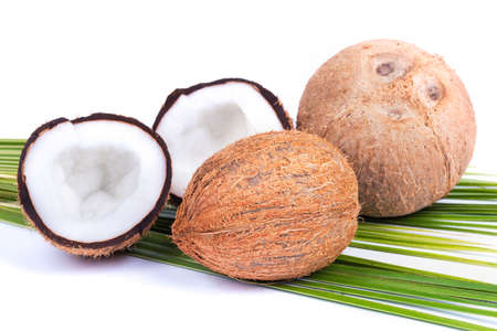 Coconut on a white background Zdjęcie Seryjne