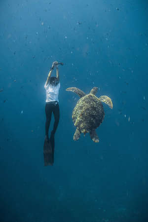 freediving: Dancing With Turtle Stock Photo
