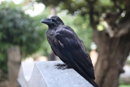 a crow on a stone Stock Photo