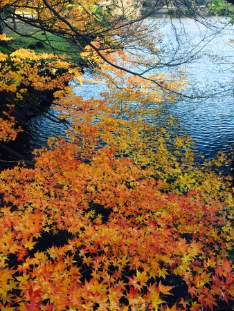 autumn colour of leaves in Japanese garden. Stock Photo