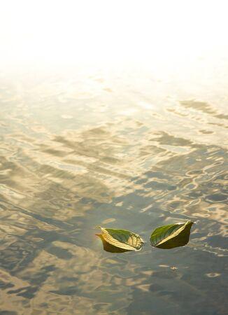 glistening: Dos hojas en el agua cristalina Foto de archivo
