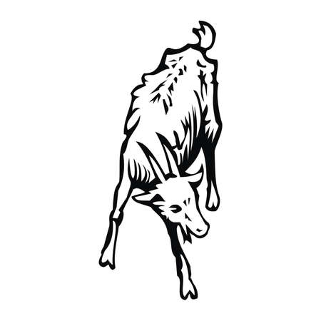 ruminant: goat