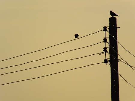 backlit: Backlit Stock Photo