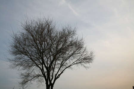 a long poem: Bare trees in winter