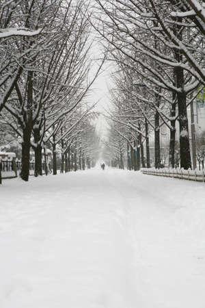 Winter Stock Photo - 10187516