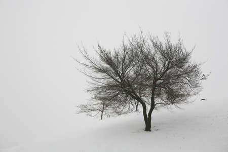 a long poem: Winter LANG_EVOIMAGES