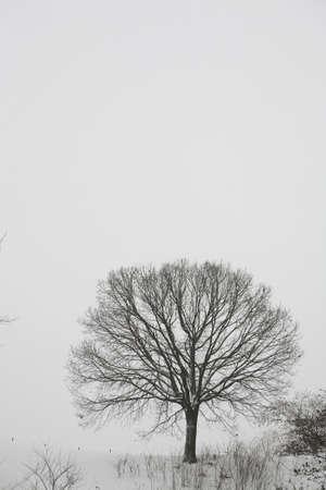winter photos: Winter LANG_EVOIMAGES
