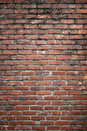spunk: Wall LANG_EVOIMAGES