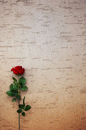 Rose photo of the month Stock Photo - 10186793