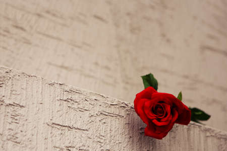 Rose photo of the month Stock Photo - 10186772