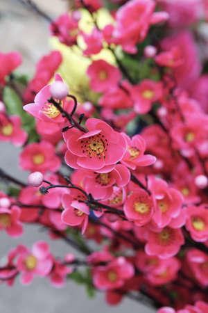 exclusive photo: Flower image