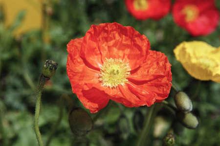 Flower Ernest Stock Photo - 10208438