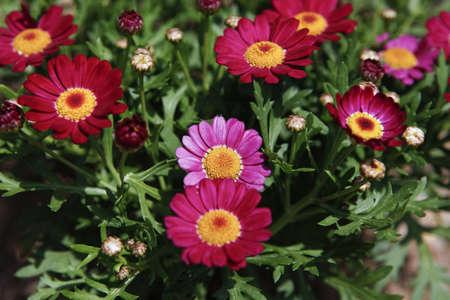 Flower Ernest Stock Photo - 10208439