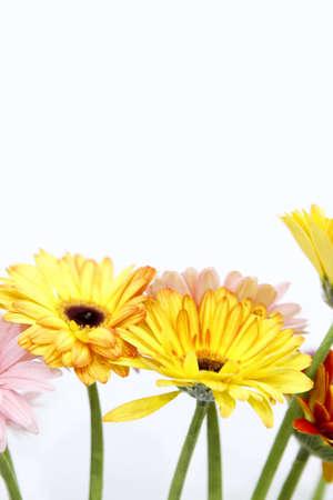 ernest: Flower Ernest