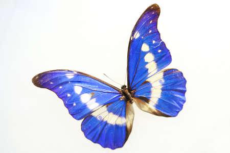 artificial flowers: butterfly