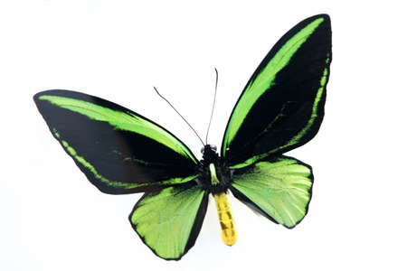 butterfly Stock Photo - 10208567