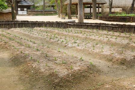 battered land: Culture & tradition