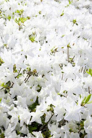 Flower Ernest Stock Photo - 10209289
