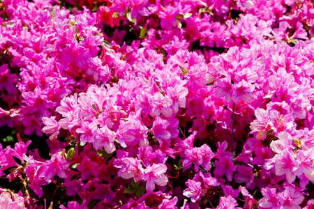 Flower Ernest Stock Photo - 10209291