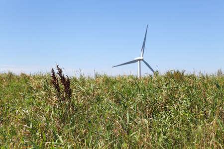 Photo of big pasture Stock Photo - 10212177