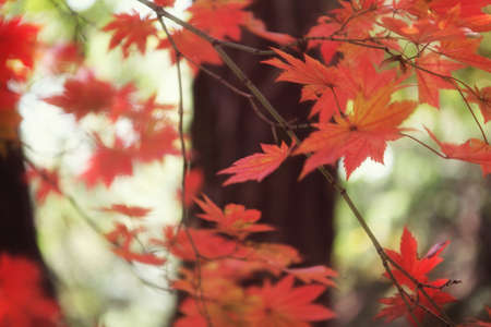 Fall foilage Stock Photo - 10230687