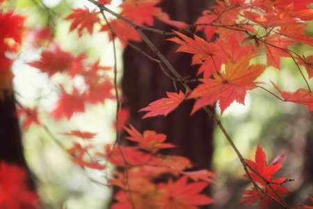 Fall foilage  Stock Photo - 10230687