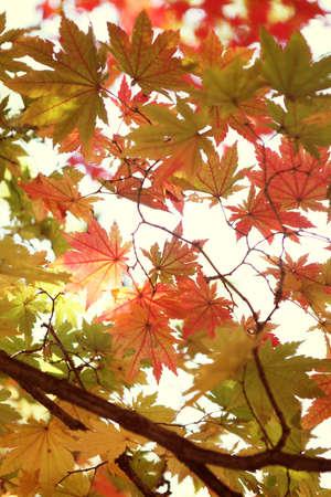 Fall foilage  Stock Photo - 10230688