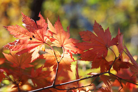 crimson colour: Fall foilage  LANG_EVOIMAGES