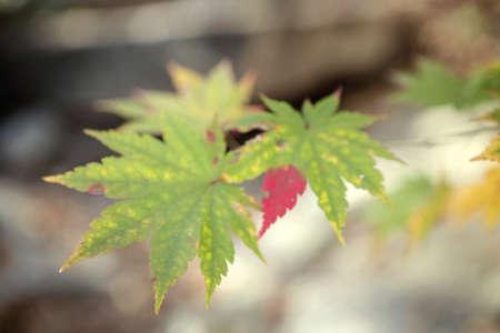 Fall foilage Stock Photo - 10230694