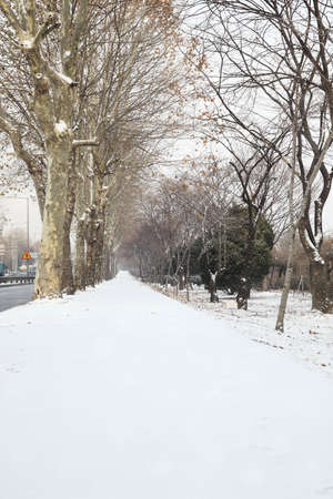 Snow covered Landscape Stock Photo - 10231283