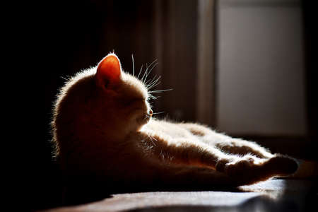 domestic cat lying on the floor and basking in the sun
