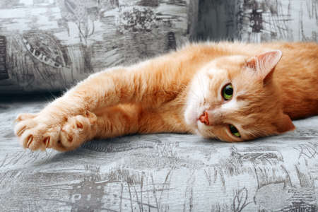 clseup of ginger cat lying on couch and stretching itself