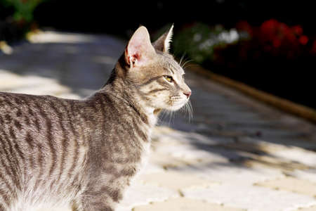 gray tabby cat squinting at the sunlight