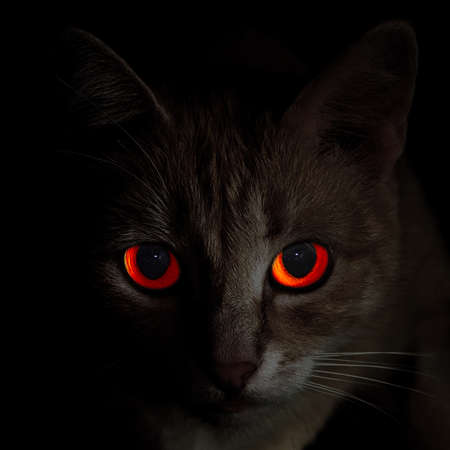 full face portrait of creepy red-eyed cat in darkness