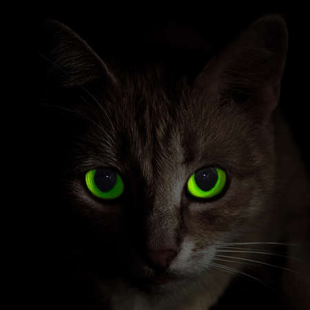 full face portrait of creepy green-eyed cat in darkness