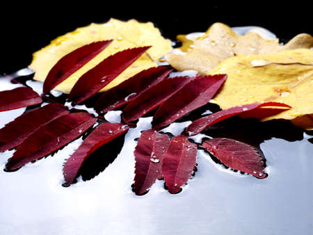 fallen leaves floating in dark water, closeup Stock fotó