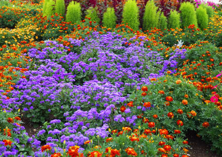 flowerbed with various flowers