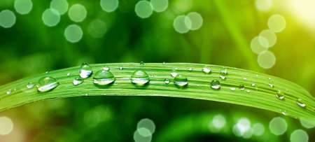 Rain drops on a blade of grass, macro, shallow depth of field, sunlight effect, suitable for header or banner