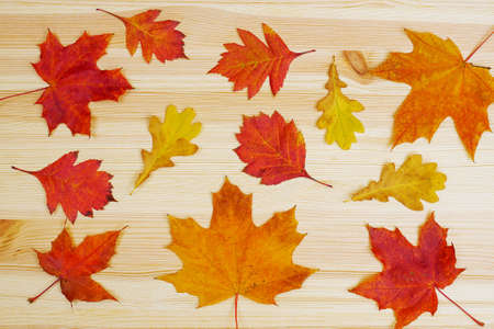 top view on autumn leaves on wooden background, flat lay, maple, oak and apple tre leaves