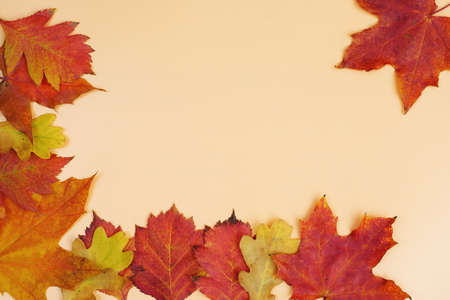 frame composed of autumn red and yellow leaves on yellow background