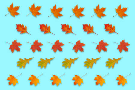 pattern with autumn red, orange and yellow leaves on blue background Stock fotó