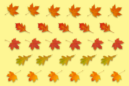 pattern with autumn red, orange and yellow leaves on yellow background