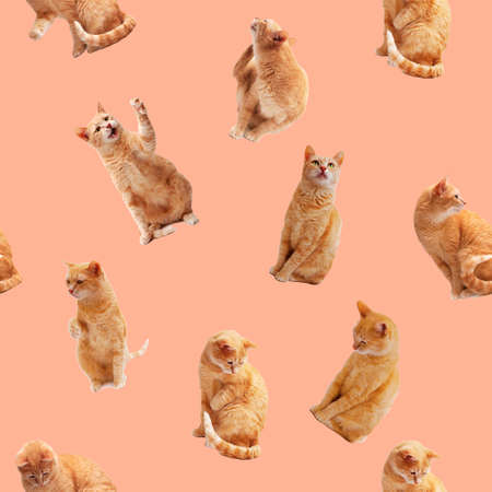 Seamless pattern with ginger cat on pink