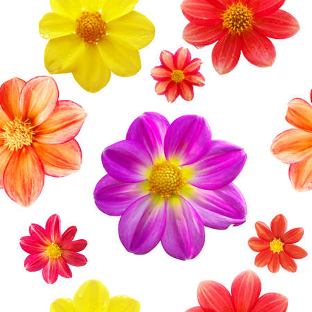 seamless pattern with red, orange, yellow and purple flower heads isolated on white background