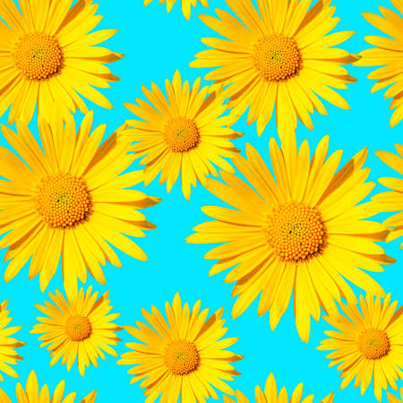 seamless pattern with yellow daisy flower heads on blue background Stock fotó