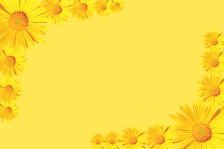 Yellow daisy flowers corner arrangement on yellow background, flat lay, copy space