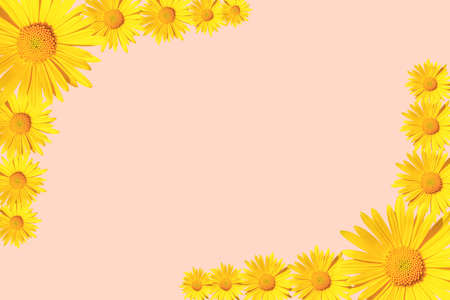 Yellow daisy flowers corner arrangement on pink background, flat lay, copy space Stock fotó
