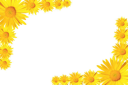 Yellow daisy flowers corner arrangement isolated on white background, flat lay, copy space